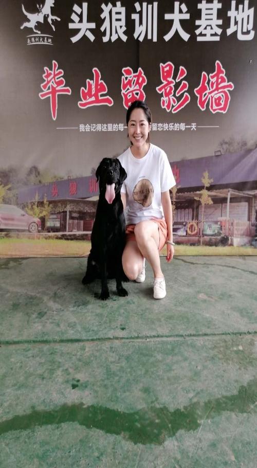 龍泉狗狗訓練費用_成華區費用-四川頭狼寵物服務有限公司